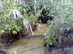 https://imagens.mfrural.com.br/mf-videos-output/2018/9/fazenda-no-para-250920181050294.mp4