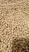 Soja GMO / Soja Non GMO