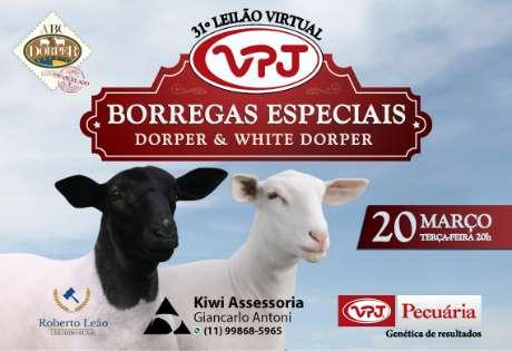 31º LEILÃO VIRTUAL VPJ BORREGAS ESPECIAIS