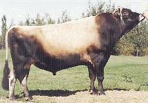 Botijão de sêmen com 129 doses de Touros Jersey.