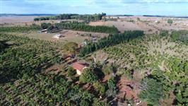 15 hectares próximo ao DAIA, 6.000 árvores de mogno africano plantadas / Haras / Viveiro Florestal
