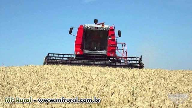 Terceirização de colheita MF32 SR