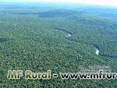 Fazenda de Mata Natural 120 HA com escritura no Amazonas R$500,00 por HA