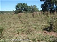 Arrendo área para plantio de eucalipto no MS