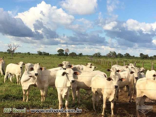Fazenda pra agricultura pecuária no Tocantins