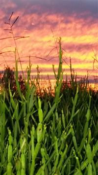 Procura-se parceiro rural para explorar terras de forma orgânica/agroecológica.