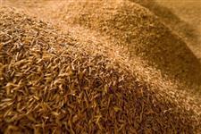 Casca de arroz moída