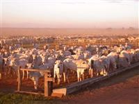 Vendo fazenda em Rondolândia/MT formada para pecuária ou plantio