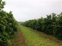 Vendo fazenda com plantação de laranja na região de Avaré/SP