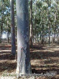 Vendo dormentes tratados com auto-clave de eucalipto citriodora 2,80/0,24x0,17