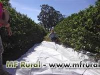 Lona em polipropileno para colheita de café