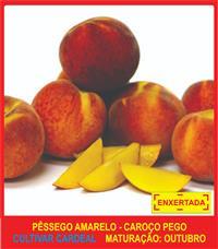 04 Mudas De Pêssego Amarelo ENXERTADAS - Super Promoção