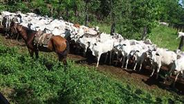 Rancho ferradura - Terras de ótima qualidade 10km da cidade
