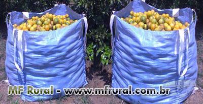 Big Bag p/ colheita de laranja e outros cítricos