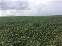Fazenda com 4.594 hectares em Santo Antônio do Leverger/MT