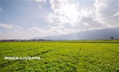 Fazenda com 200 hectares em Canarana/MT