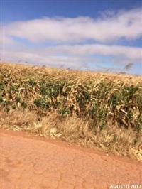Fazenda c/ 987 hectares em Diamantino/MT