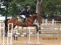 Cavalo de salto B H