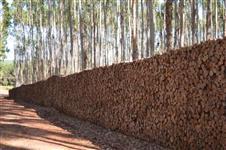 Sítio 36,3 hectares plantado inteiro de eucalipto mudas clonadas (brotas)