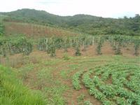 Fazenda em Guapiara - SP