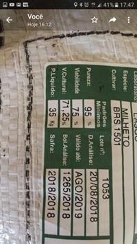 semente de milheto certificada