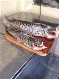 peixes, estou iniciando uma distribuicao de pescados em MG procuro parceria