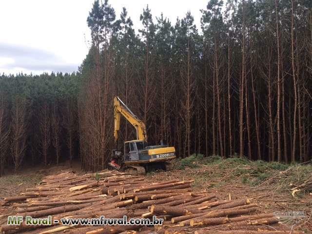 Harvester Florestal (escavadeira com cabeçote processador LogMax )
