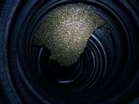 Captura Remoção Coleta Caça Enxame de Abelhas em Maceió