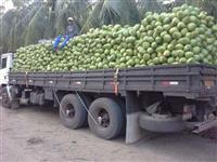 O melhor coco verde do Brasil