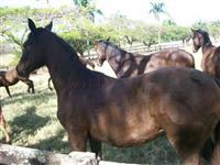 Fazenda Torr. Gold - Região Campinas/SP/BR (374)