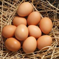Produção Artesanal de Ovos de Galinha Colonial Caipira