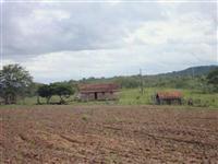 Fazenda em minas gerais joão pinheiro