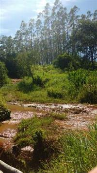 Arrendamos área para Apicultura, colmeias e criação de abelhas