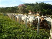 Fazenda Escriturada Formada