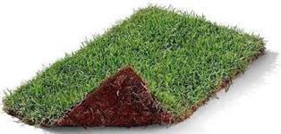 Venda grama esmeralda em tapete
