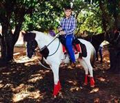 Garanhão Paint Horse Homozigoto - Massai Flincker Cat Pio Registro Nº P-12935