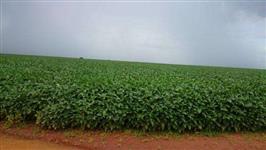 Excelente Fazenda 1.210 hect. Canabrava - MT p/ soja/gado
