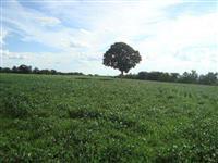 Fazenda Indiara 275 alq