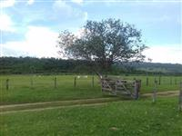 Linda Fazenda Uberaba MG 484 hectares