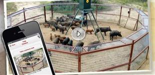 Sistemas Anti - Javali ou Java Porco, cercas, baias, eletricas eletronicas javap