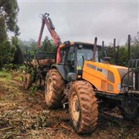 Remoção/Baldeio, corte e carregamento de toras de eucaliptos