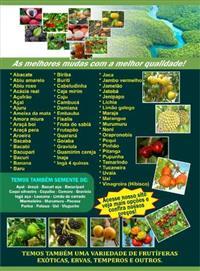 mudas de frutas da amazonia e cerrado