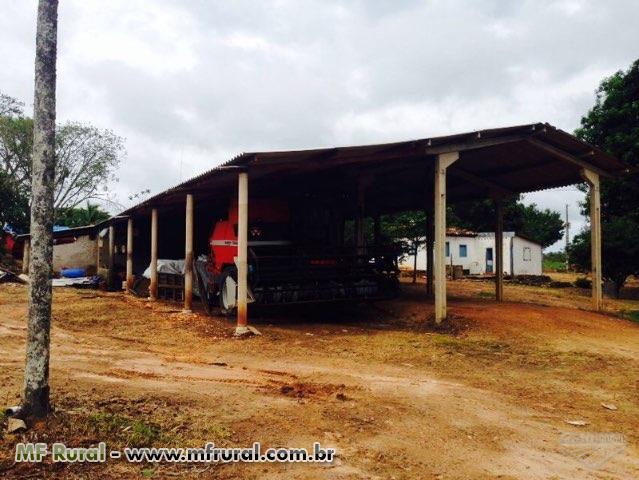 Fazenda 255 ha em soja Goiás