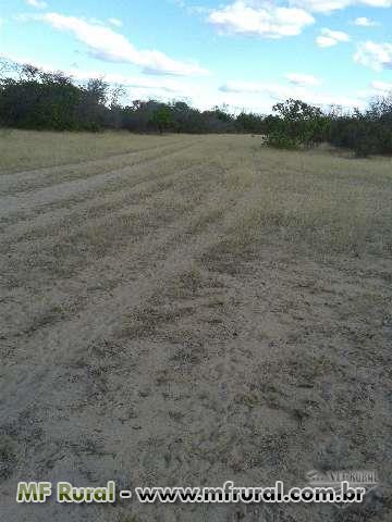 Fazenda Oeste Bahia