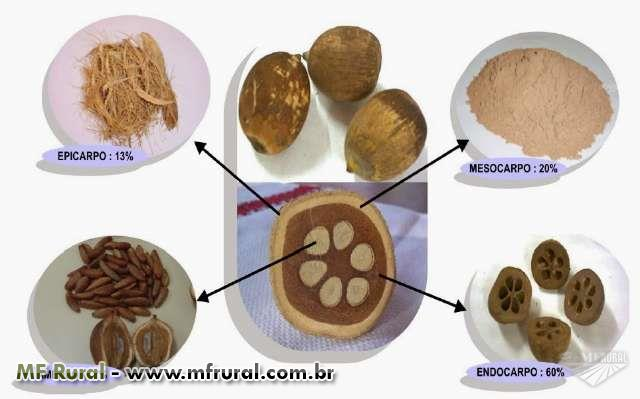 Mesocarpo de Babaçu
