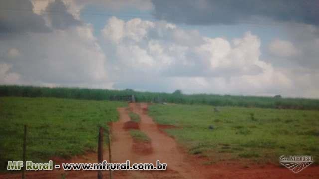 VENDO EXCELENTE FAZENDA 373.761 ha ÓTIMA LOCALIZAÇÃO