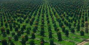 PROJETOS FUTUROS: MADEIRA AGROFLORESTAL