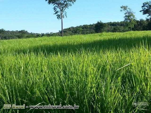 Fazenda para Pecuária e Reflorestamento em Produção