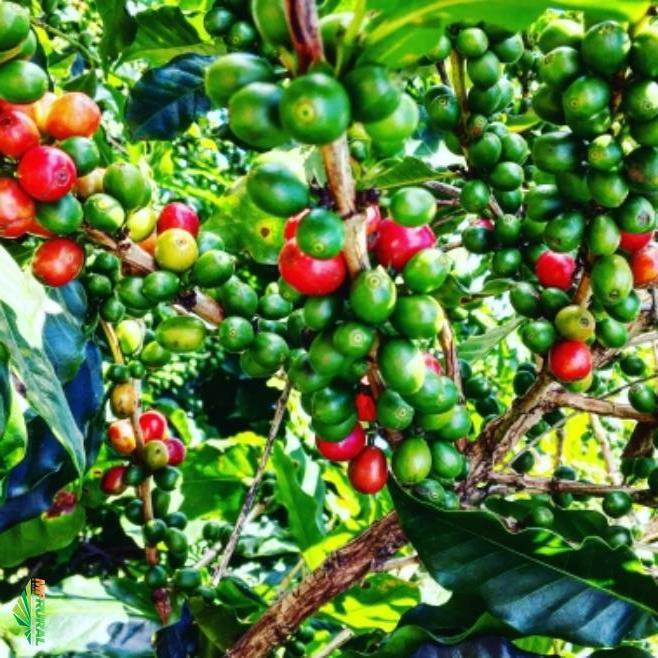 Fazenda CAFÉ à venda em São Sebastião do Paraíso-MG