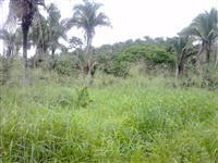 100 hectares de terras